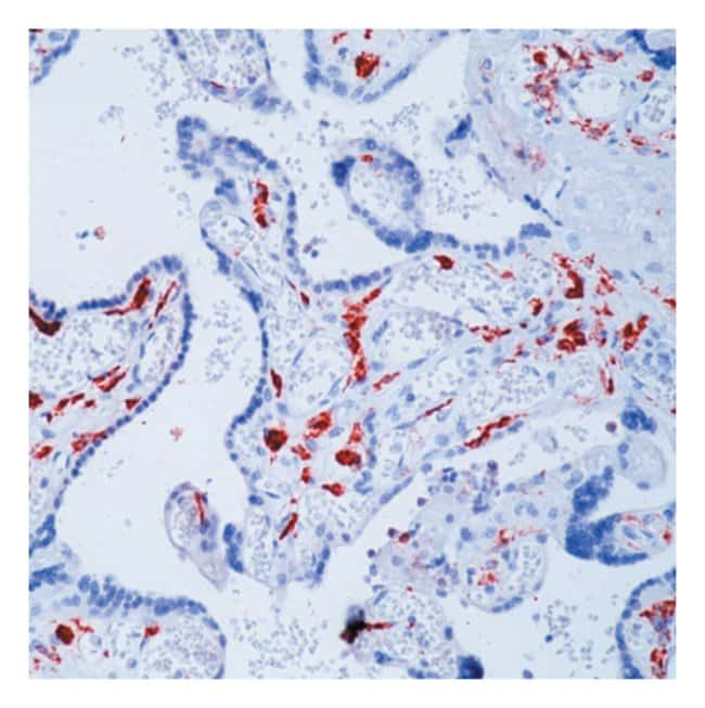 Thermo Scientific Lab Vision CD163 Ab-1, Mouse Monoclonal Antibody::