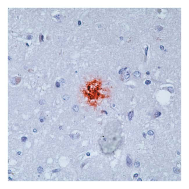 Epredia™Lab Vision™ Amyloid A4/Amyloid β Ab-1, Mouse Monoclonal Antibody 100μL; Unlabeled; Supernatant Epredia™Lab Vision™ Amyloid A4/Amyloid β Ab-1, Mouse Monoclonal Antibody