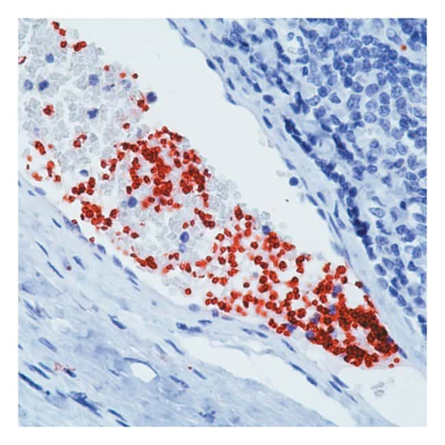 Thermo Scientific Lab Vision CD42b (GPIb) Ab-1, Mouse Monoclonal Antibody
