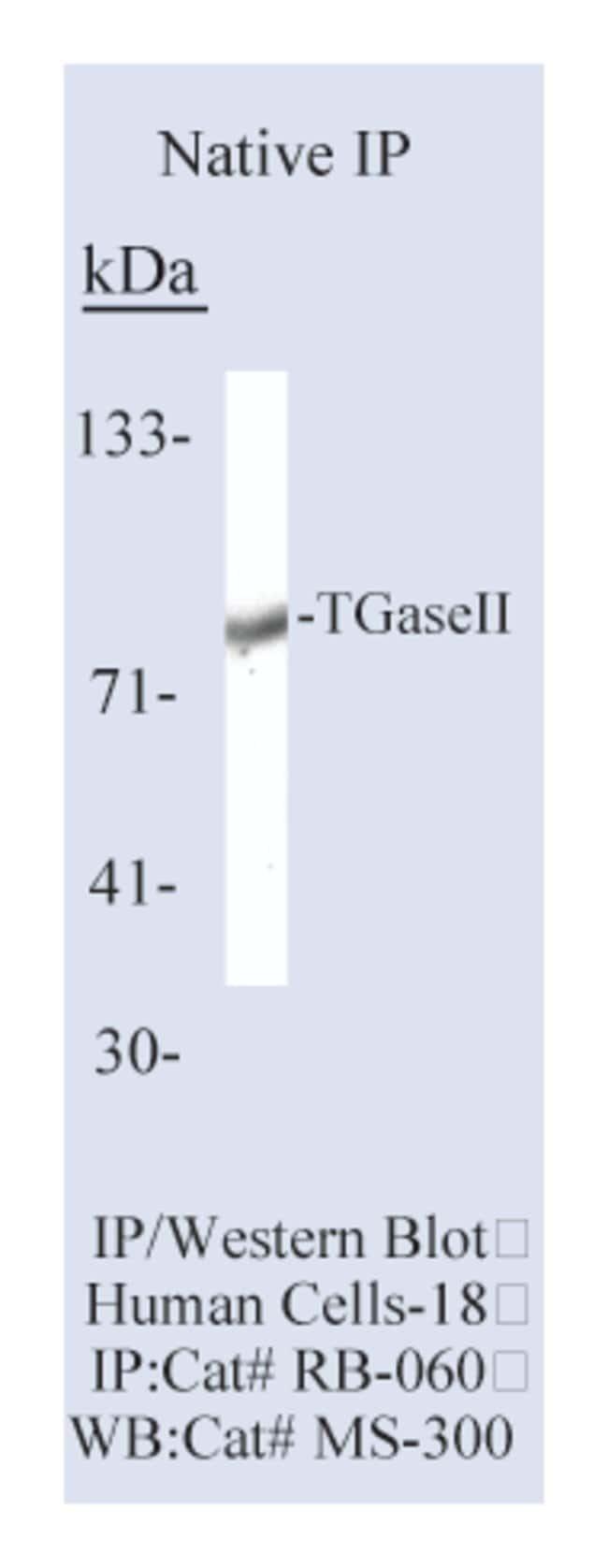 Thermo Scientific Lab Vision Transglutaminase II Ab-4, Rabbit Polyclonal