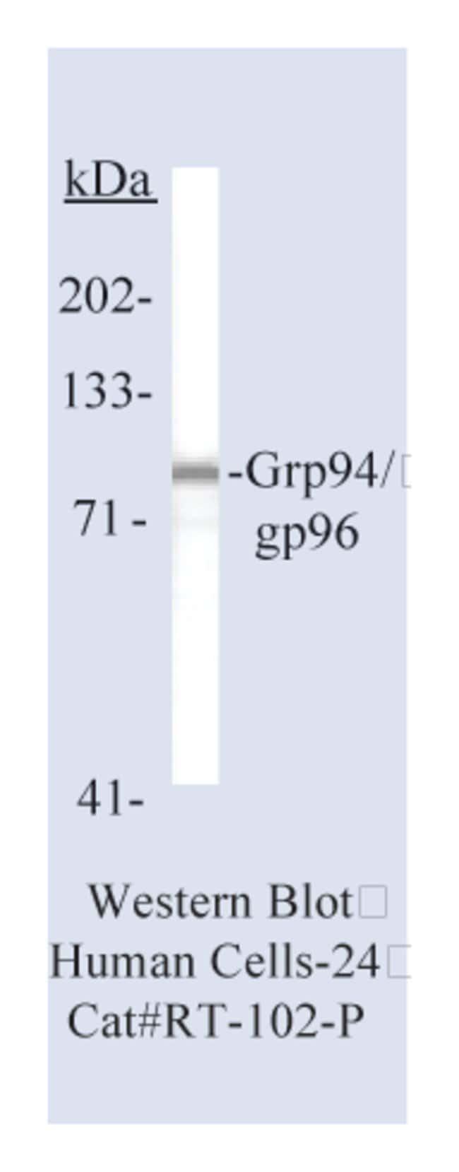 Thermo Scientific Lab Vision Glucose-Regulated Protein 94 (Grp94)/gp96