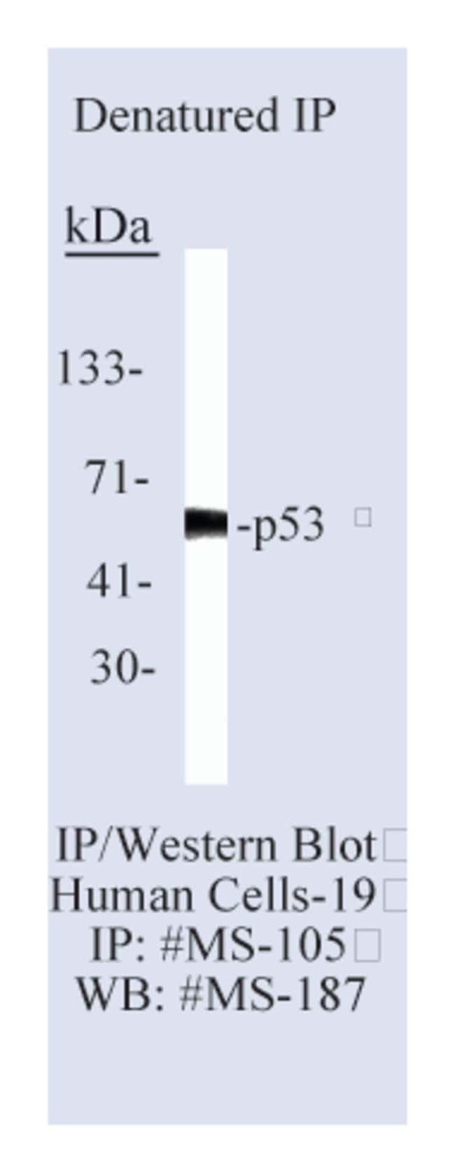 Thermo Scientific Lab Vision p53 Ab-2, Mouse Monoclonal Antibody::