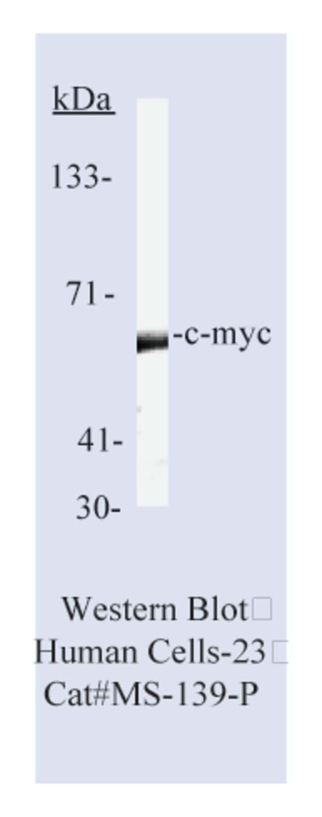Thermo Scientific Lab Vision c-myc Ab-2, Mouse Monoclonal Antibody::