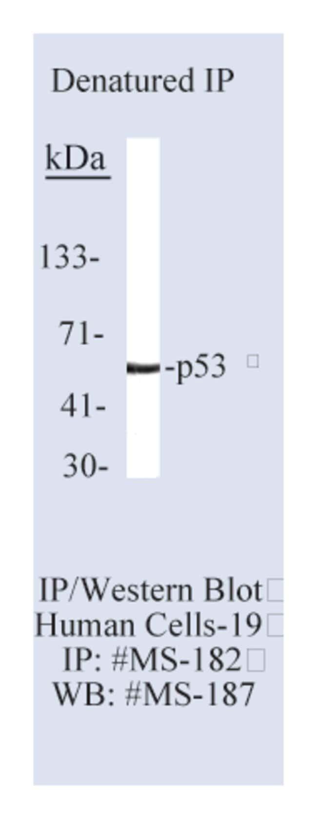 Thermo Scientific Lab Vision p53 Ab-4, Mouse Monoclonal Antibody::