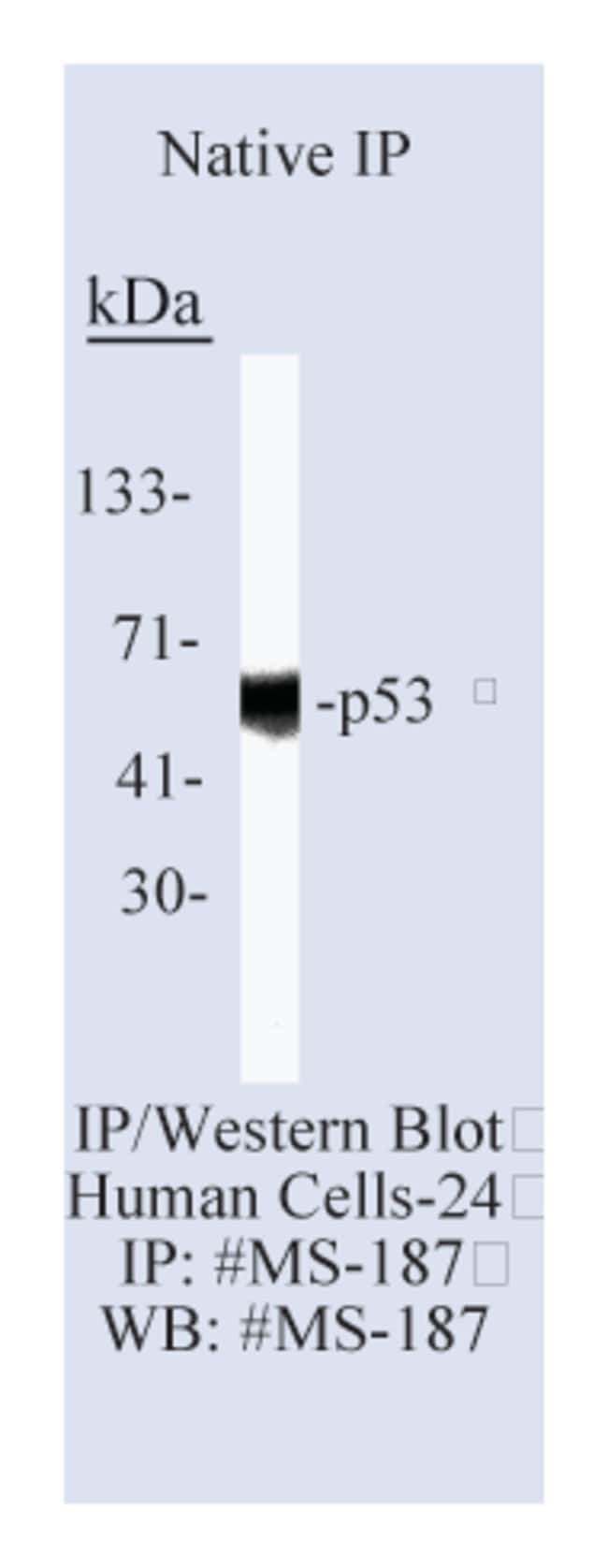 Thermo Scientific Lab Vision p53 Ab-6, Mouse Monoclonal Antibody::