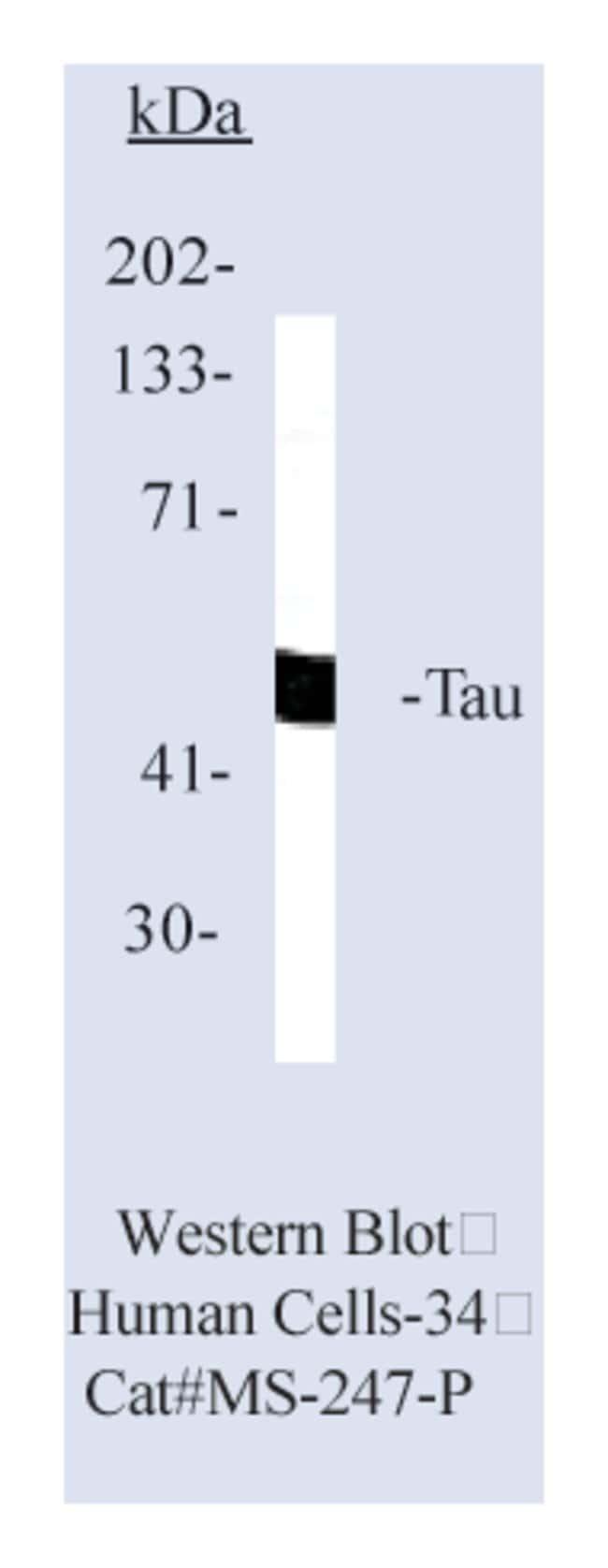 Thermo Scientific Lab Vision Tau Ab-2, Mouse Monoclonal Antibody::