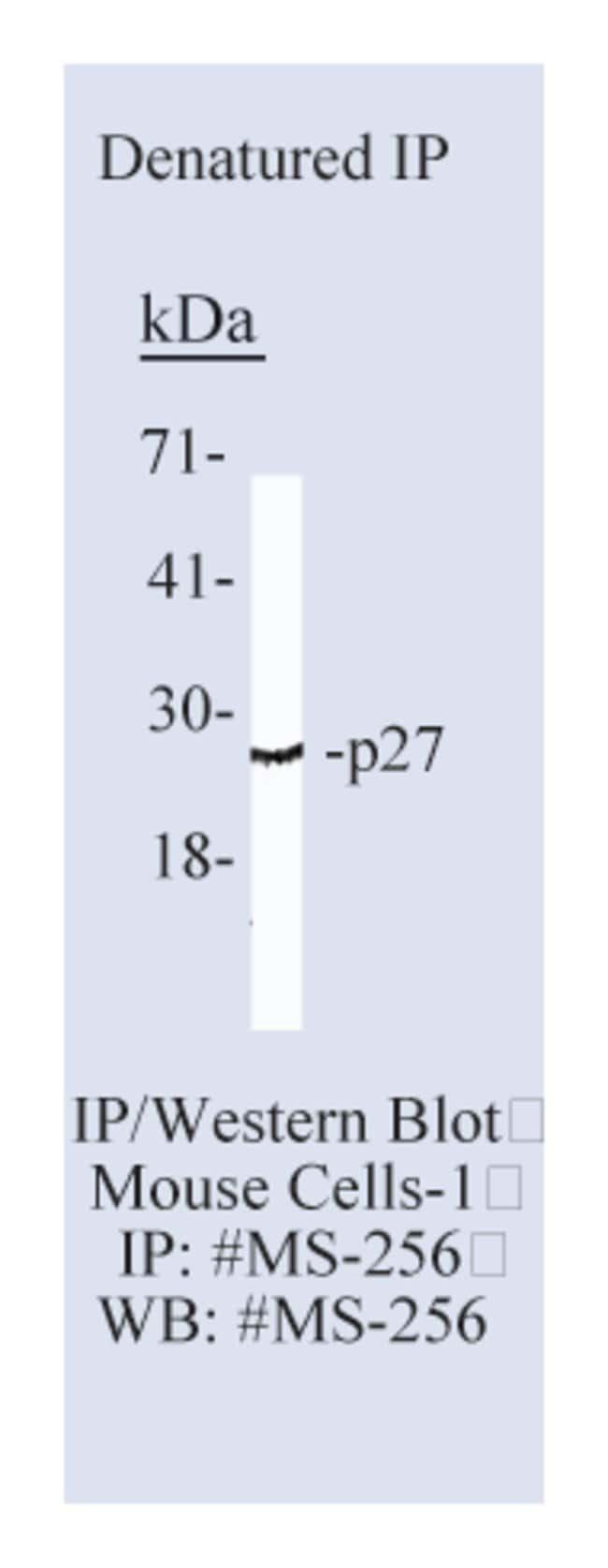 Thermo Scientific Lab Vision p27 Kip1 Ab-1, Mouse Monoclonal Antibody::