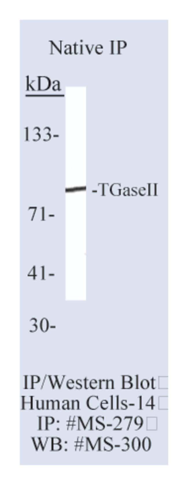 Thermo Scientific Lab Vision Transglutaminase II Ab-2, Mouse Monoclonal