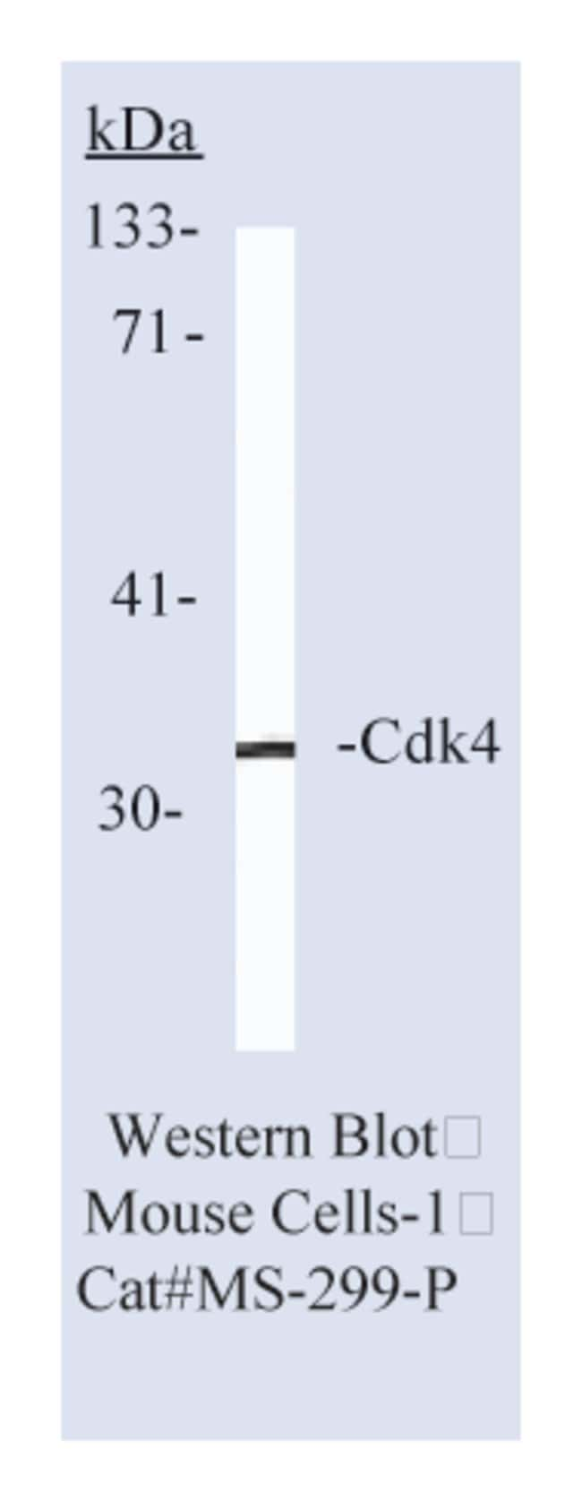Thermo Scientific Lab Vision Cdk4 Ab-1, Mouse Monoclonal Antibody::