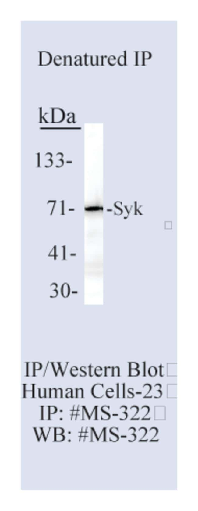 Thermo Scientific Lab Vision Syk Signaling Protein Ab-1, Mouse Monoclonal