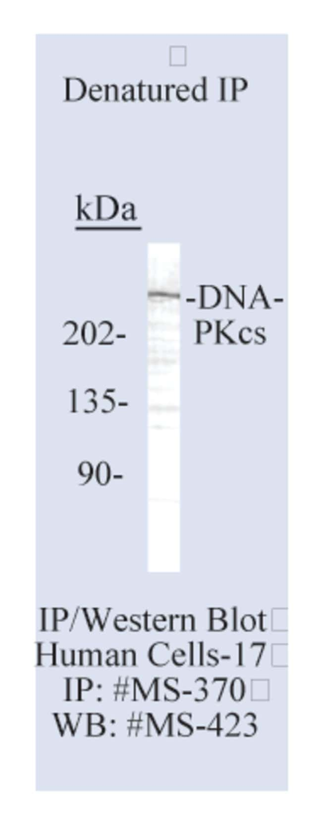 Thermo Scientific Lab Vision DNA-PKcs Ab-2, Mouse Monoclonal Antibody::