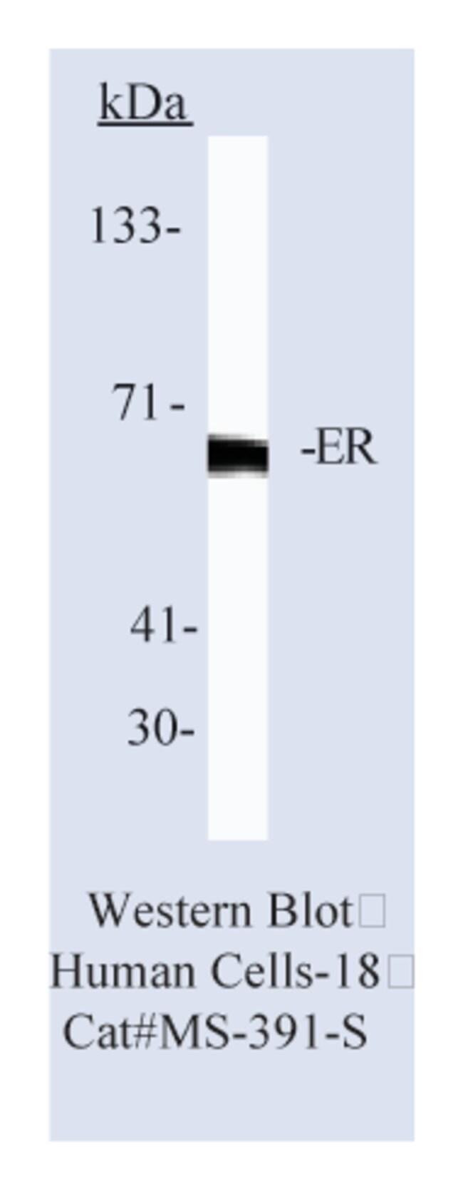 Thermo Scientific Lab Vision Estrogen Receptor Ab-12, Mouse Monoclonal