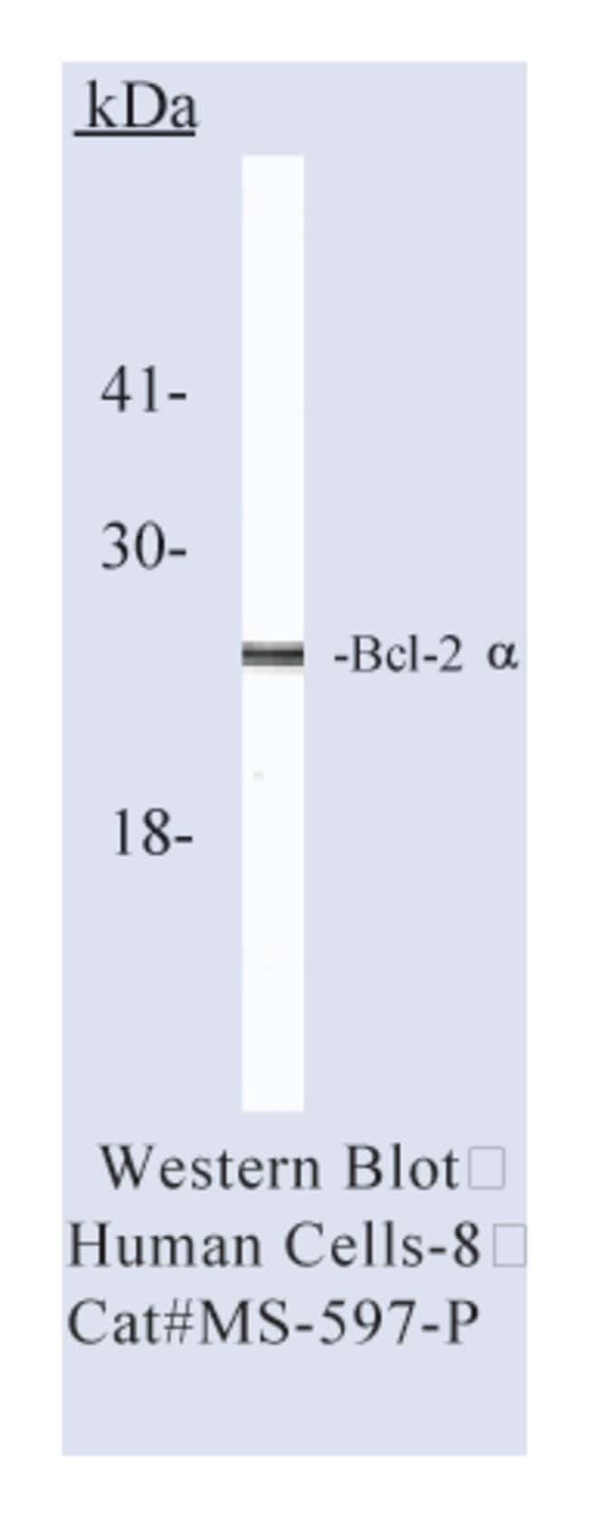 Thermo Scientific Lab Vision Bcl-2 Ab-3, Mouse Monoclonal Antibody::