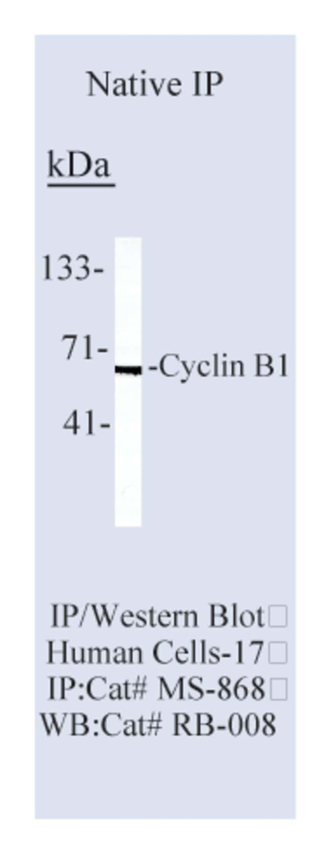 Thermo Scientific Lab Vision Cyclin B1 Ab-3, Mouse Monoclonal Antibody::