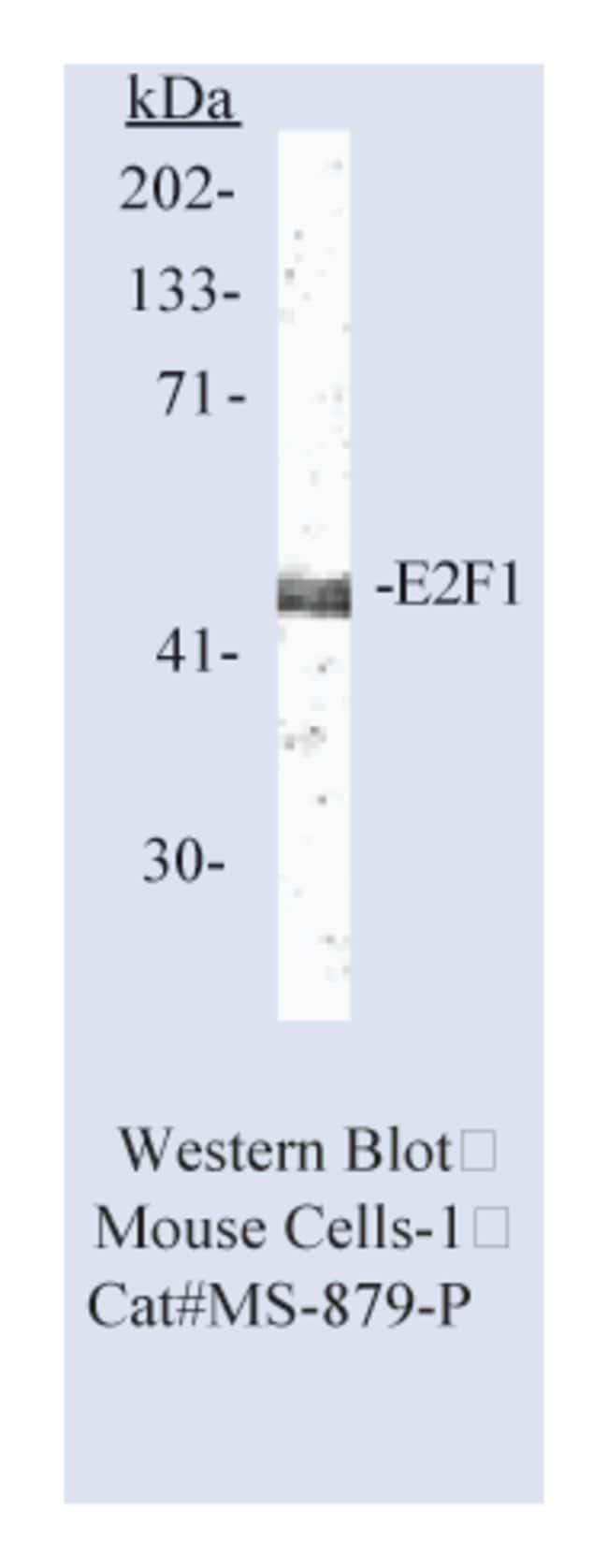 Thermo Scientific Lab Vision E2F-1 Transcription Factor Ab-6, Mouse Monoclonal