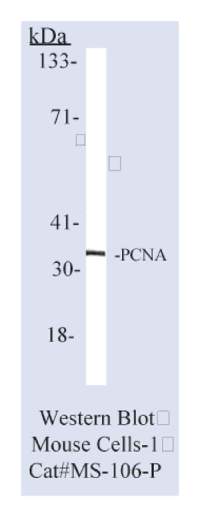 Thermo Scientific Lab Vision PCNA (Proliferating Cell Nuclear Antigen)