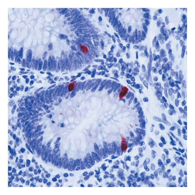 Thermo Scientific Lab Vision Serotonin Ab-1, Mouse Monoclonal Antibody::