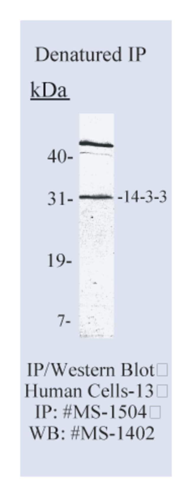 Thermo Scientific Lab Vision 14.3.3 pan Ab-4, Mouse Monoclonal Antibody::
