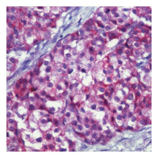 Thermo Scientific™Lab Vision™ MUC-1 Ab-5, Hamster Monoclonal Antibody