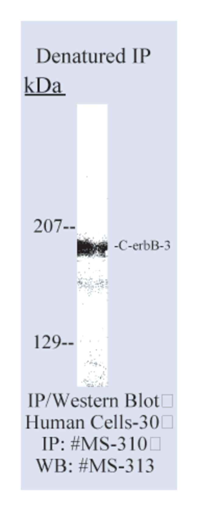 Thermo Scientific Lab Vision c-erbB-3/HER-3 Ab-6, Mouse Monoclonal Antibody::