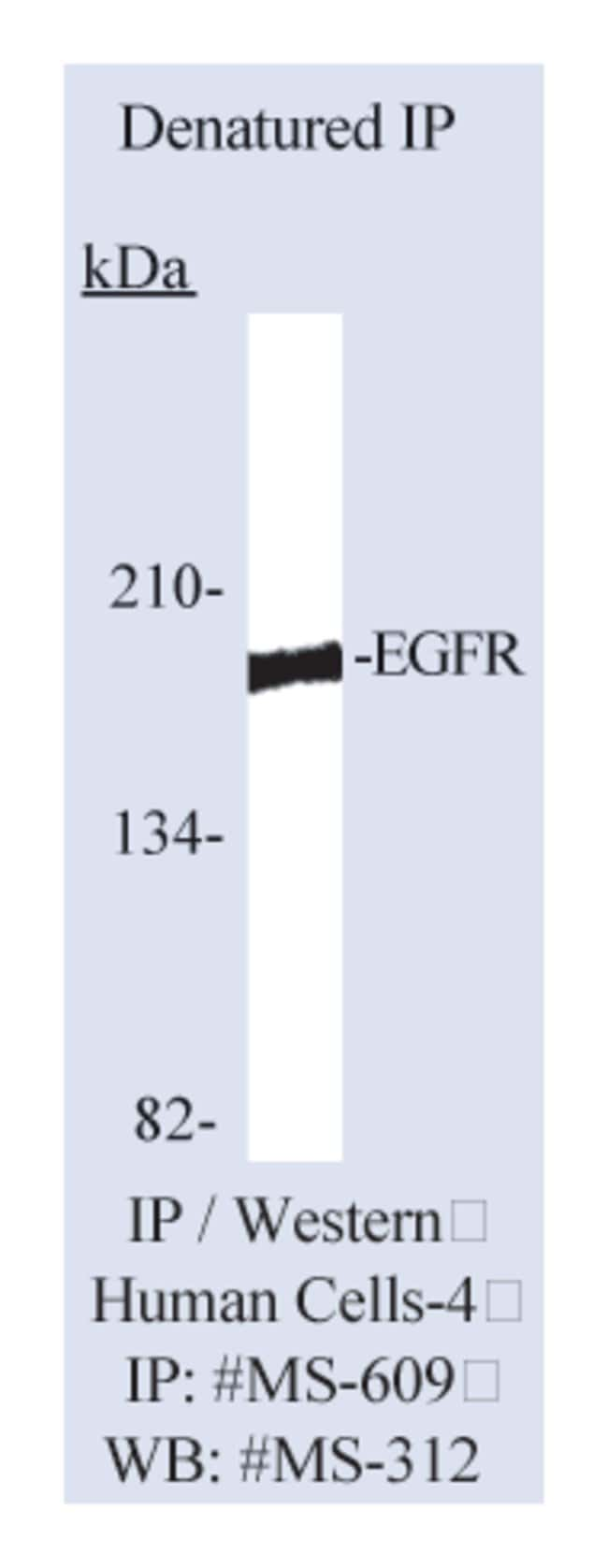 Thermo Scientific Lab Vision Epidermal Growth Factor Receptor/EGFR Ab-13,