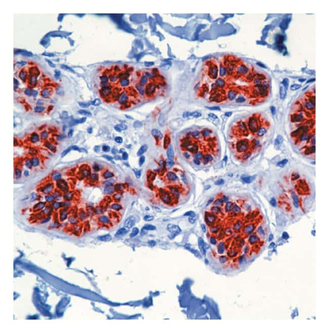Thermo Scientific Lab Vision Cytokeratin 8/18 Ab-1, Mouse Monoclonal Antibody::