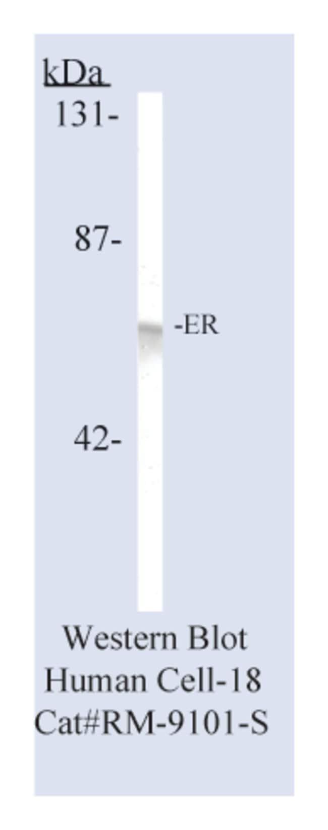 Thermo Scientific Lab Vision Estrogen Receptor (SP1), Rabbit Monoclonal