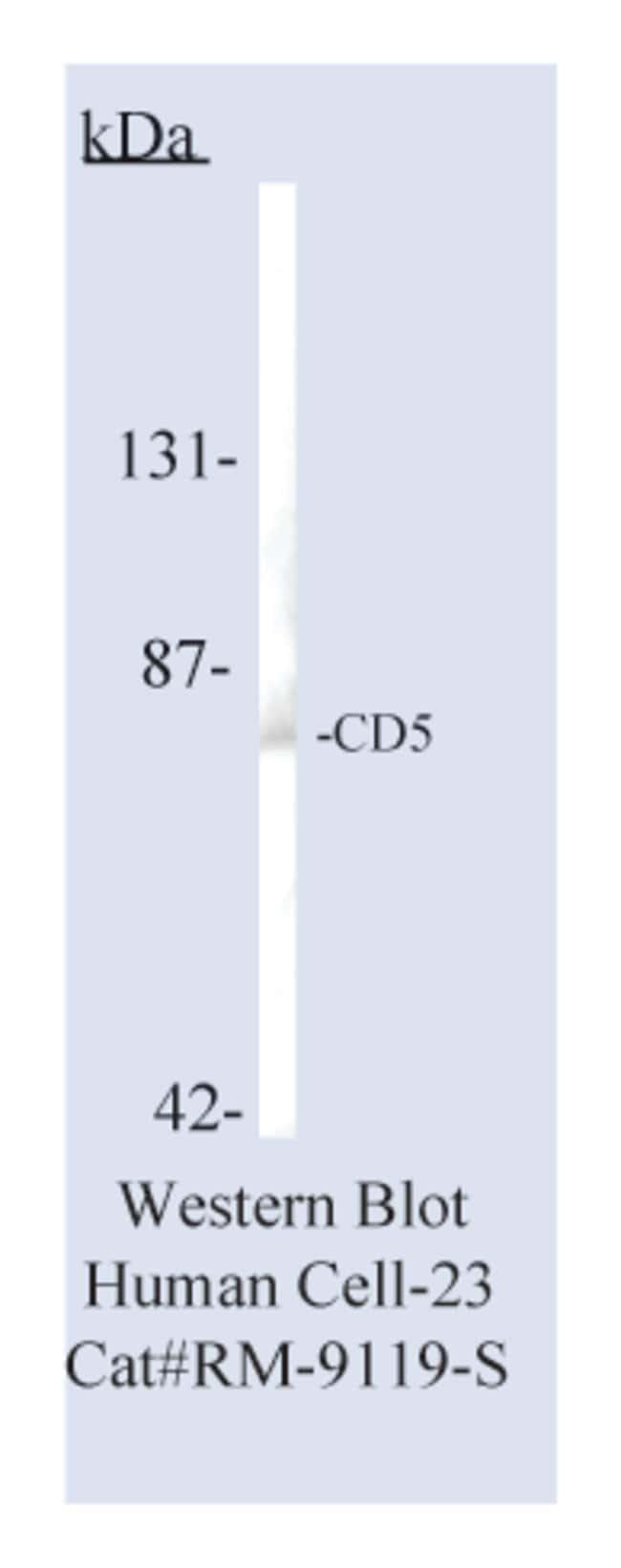 Thermo Scientific Lab Vision CD5, Rabbit Monoclonal Antibody::