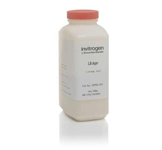 InvitrogenLB Agar, powder (Lennox L agar):Microbiology Susceptibility Testing:Susceptibility