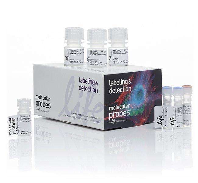 Invitrogen™Click-iT™ EdU Cell Proliferation Kit for Imaging, Alexa Fluor™ 488 dye