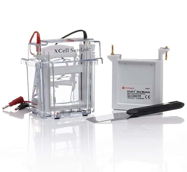 Invitrogen XCell SureLock Mini-Cell and XCell II Blot Module   1 unit:Electrophoresis,