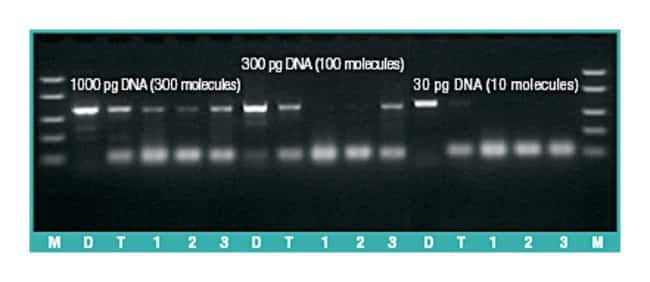 Thermo Scientific™ DreamTaq DNA Polymerase (5 U/µL): PCR Reagents and Kits PCR and qPCR