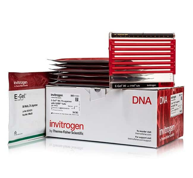 Invitrogen™ E-Gel™ 96 Agarose Gels with SYBR™ Safe DNA Gel Stain, 2% 8 gels Invitrogen™ E-Gel™ 96 Agarose Gels with SYBR™ Safe DNA Gel Stain, 2%