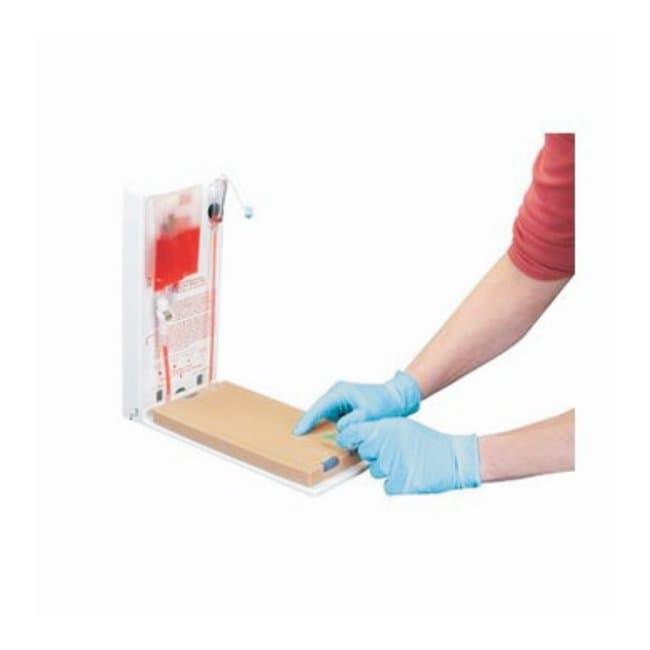 3B Scientific™Advanced Four-Vein Venipuncture Training Aid™ — Dermalike II™ Latex Free<img src=