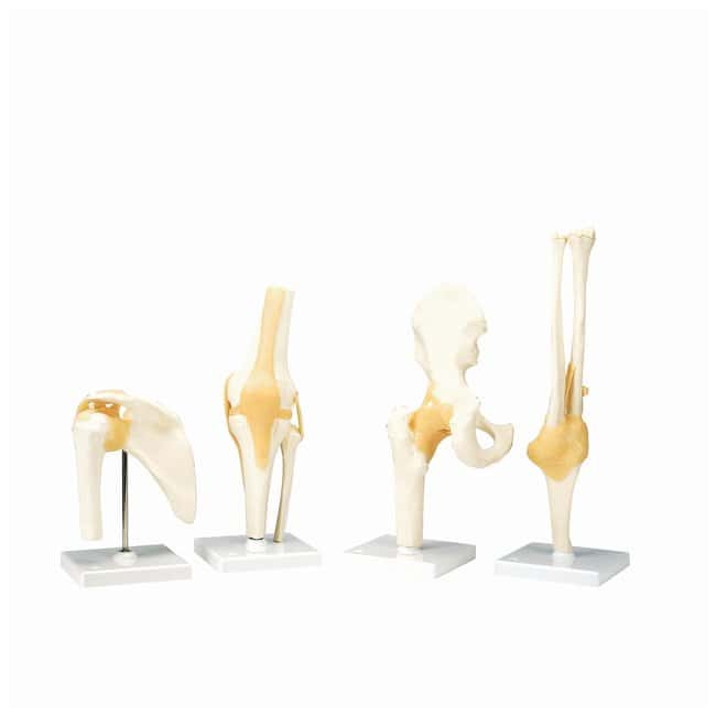 3B Scientific Functional Joint Models - includes 3B Smart Anatomy :Teaching