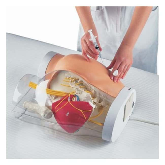 3B Scientific™ Two-in-One i.m. Injection Model of Buttock Injection Model of Buttock, Two-in-one features Human Anatomy