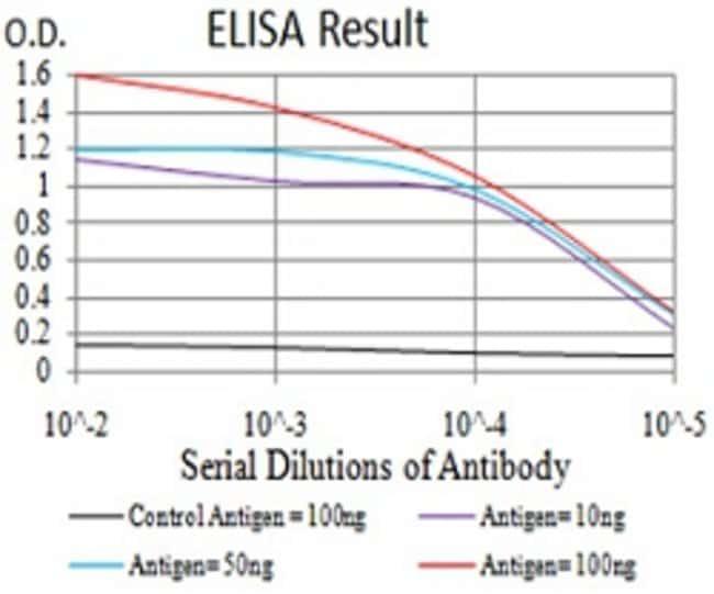 DDX3X Mouse anti-Human, Clone:3B9G8, Abnova 100μg:Antibodies