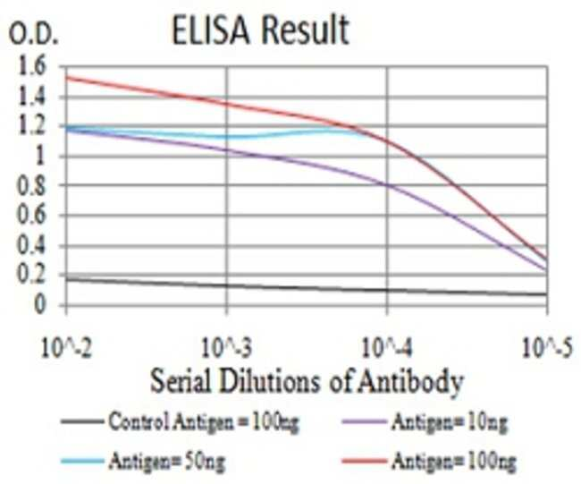 MOBKL1B Mouse anti-Human, Clone:3E7B2, Abnova 100μg:Antibodies
