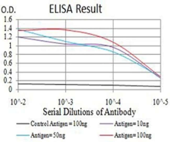 ATG2A Mouse anti-Human, Clone:4E6D4, Abnova 100μg:Antibodies