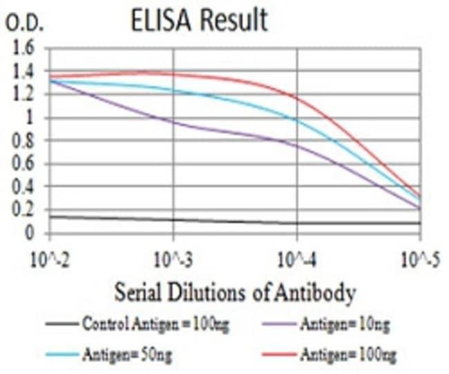 GRIN2B Mouse anti-Human, Clone:6E9A8, Abnova 100μg:Antibodies