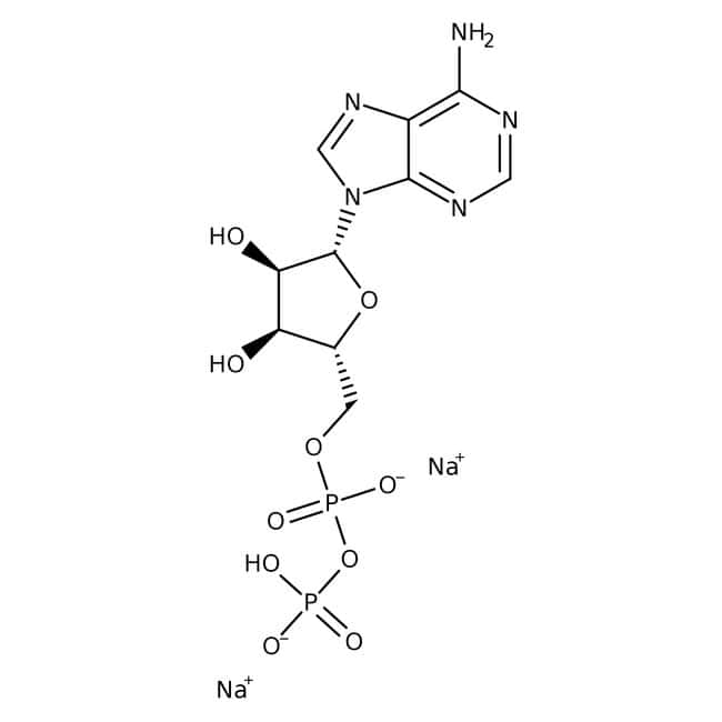 Adenosine 5'-diphosphate, disodium salt hydrate, 98%, ACROS Organics™ 250mg; Glass bottle Adenosine 5'-diphosphate, disodium salt hydrate, 98%, ACROS Organics™