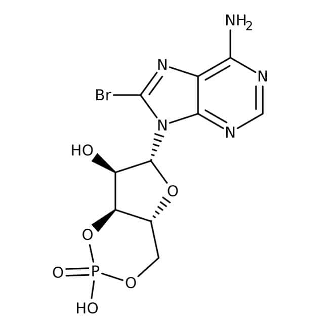 Alfa Aesar™8-Bromoadenosine-3',5'-cyclic monophosphate