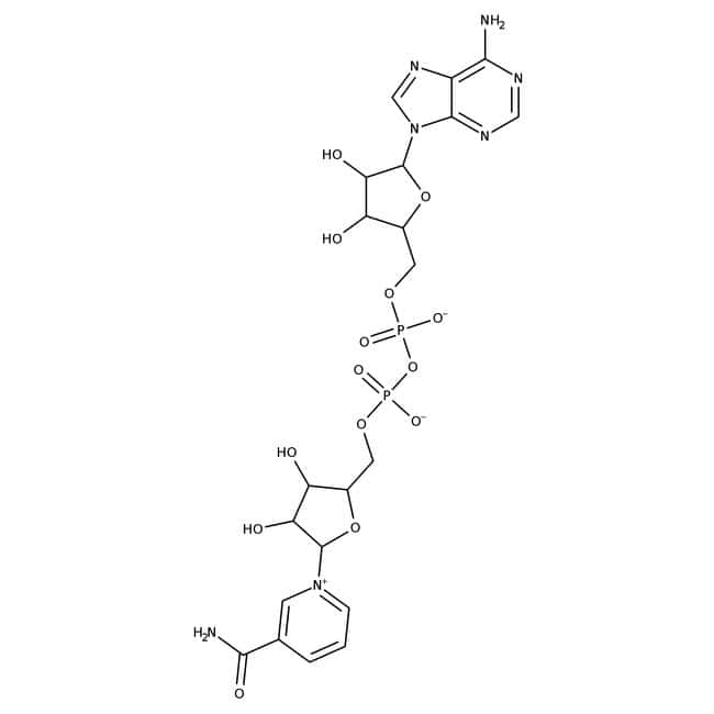 β-Nicotinamid Adenin Dinucleotid-Hydrat, 98+%, ACROS Organics ™ Glasflasche; 5g β-Nicotinamid Adenin Dinucleotid-Hydrat, 98+%, ACROS Organics ™