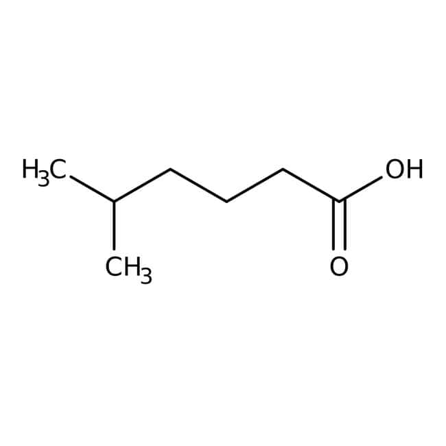 5-Methylhexanoic acid, 98%, Acros Organics