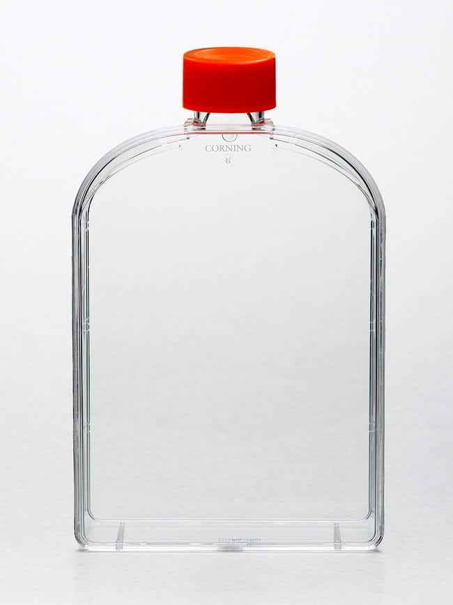 Corning Cell Culture Treated Flasks  Angled necks; Culture area: 175cm2;