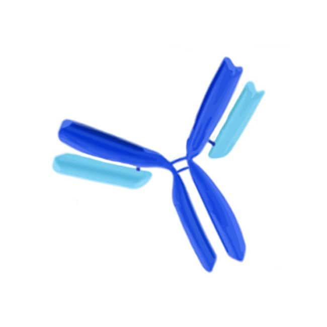 IgG (H+L) Goat anti-Mouse, Rhodamine (TRITC), Polyclonal, Secondary Antibody,