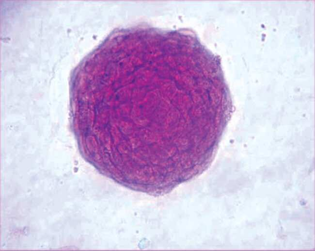 MilliporeSigma™Chemicon™ Recombinant Mouse Leukemia Inhibitory Factor Protein