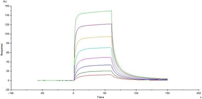 ACROBiosystemsHuman B7-1 / CD80 Protein, Fc Tag 1 mg ACROBiosystemsHuman B7-1 / CD80 Protein, Fc Tag
