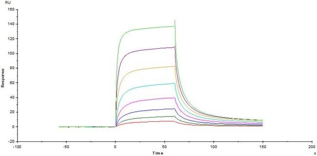 ACROBiosystems100UG Human B7-1 / CD80 Protein, Mouse IgG2a Fc Tag, low endotoxin  Produkte