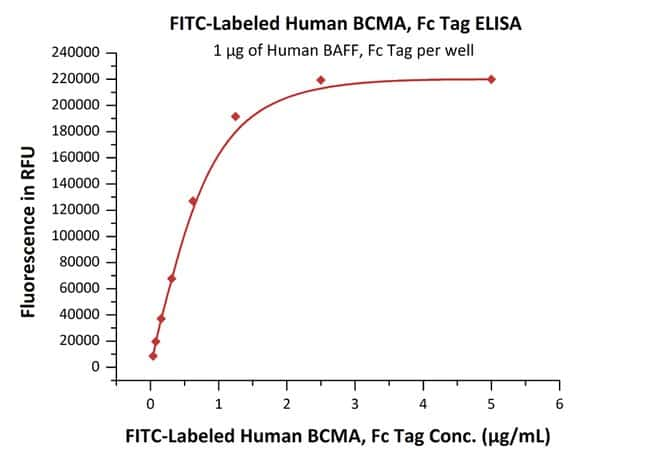 ACROBiosystems FITC-Labeled Human BCMA / TNFRSF17 Protein, Fc Tag DMF Filed 25 ug ACROBiosystems FITC-Labeled Human BCMA / TNFRSF17 Protein, Fc Tag DMF Filed